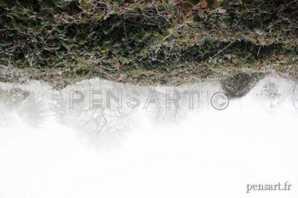 Photo nature- Paysage à l'envers