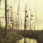 Le lac- Photo nature